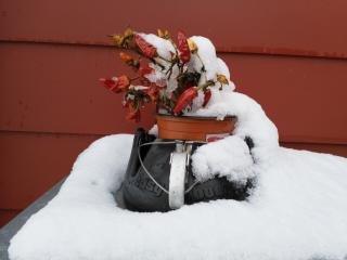 Behandlungen in der Winterzeit