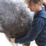 frau moser behandelt ein pferd an der brust