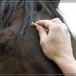 sybille moser hält eine blütenessenz an die stirn eines pferds