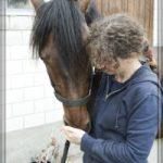 pferd frisst sybille moser aus hand